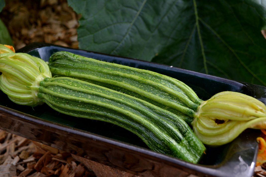 Två nyskördade squash ligger på ett fat. Freeze zucchini, two newly harvested vegetables.