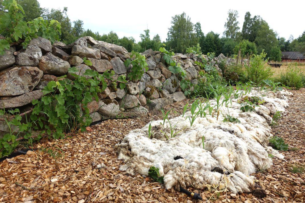 En stenmur med en lång odlingsbädd täckt med ull nedanför. Edge your beds, a bed covered in wool.