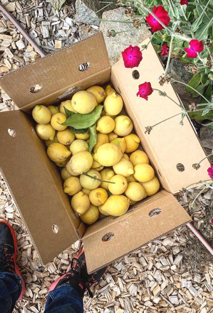 En papplåda med citroner bredvid några sommarblommor.