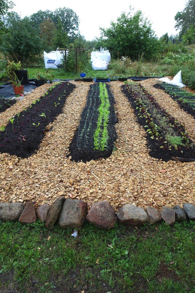 En liten köksträdgård med flis i gångarna och bäddar i raka led. Edge your beds, paths covered with wood chips.