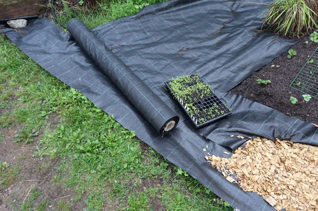 Svart markduk ligger på gräsmattan. Edge your beds, black landscape fabric