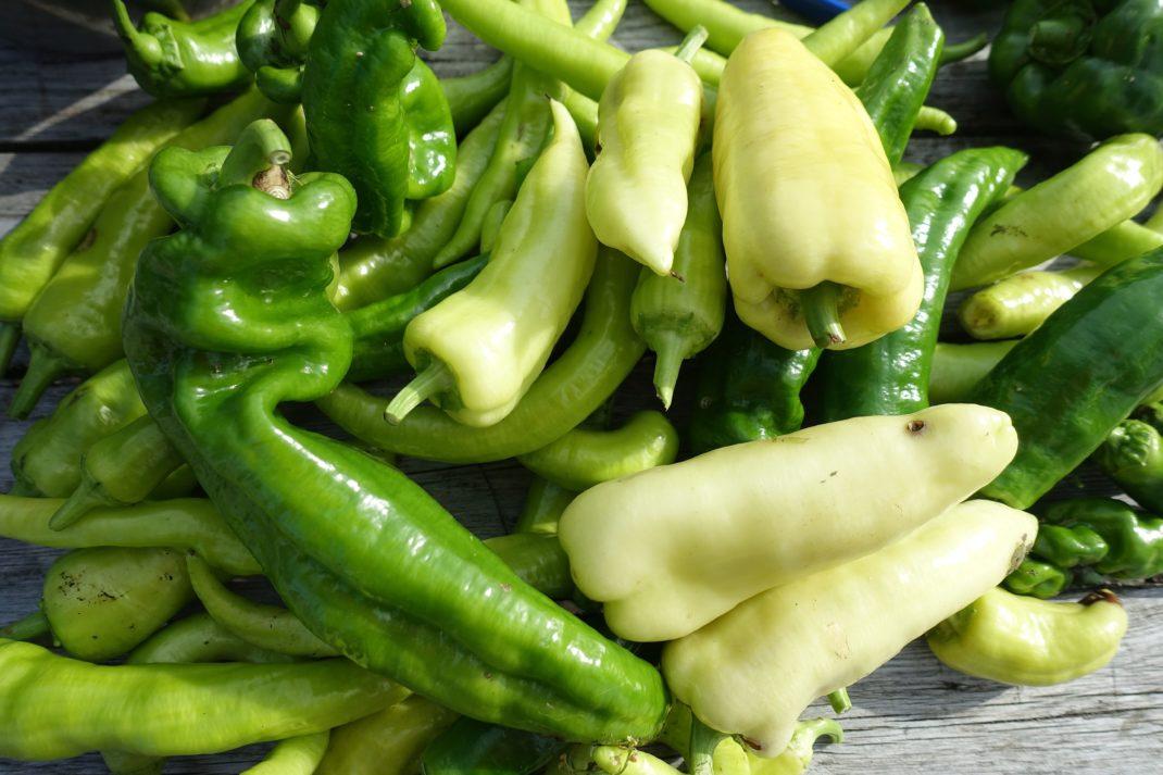 Närbild på omogna paprikor i gult och grönt. Ripen bell peppers indoors. Unripe bell peppers.