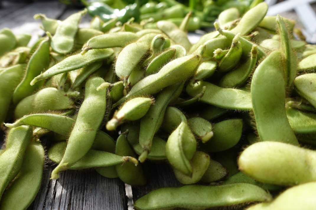 En hög med gröna sojabönor i skal på ett bord. Freeze soybeans, green beans on a table.