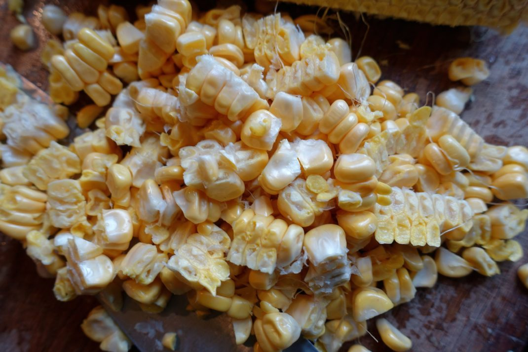 En hög med gula majskorn. Freezing homegrown corn, a pile of yellow corn kernels.