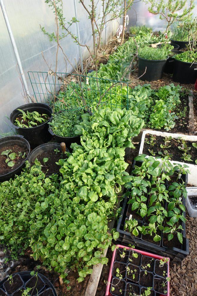 En stående bild som visar grönskan i växthuset
