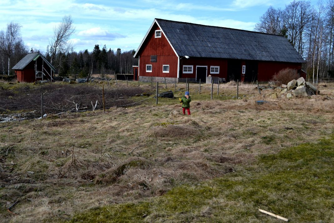 Baksidan av en tomt. An unused patch intended for the small vegetable garden