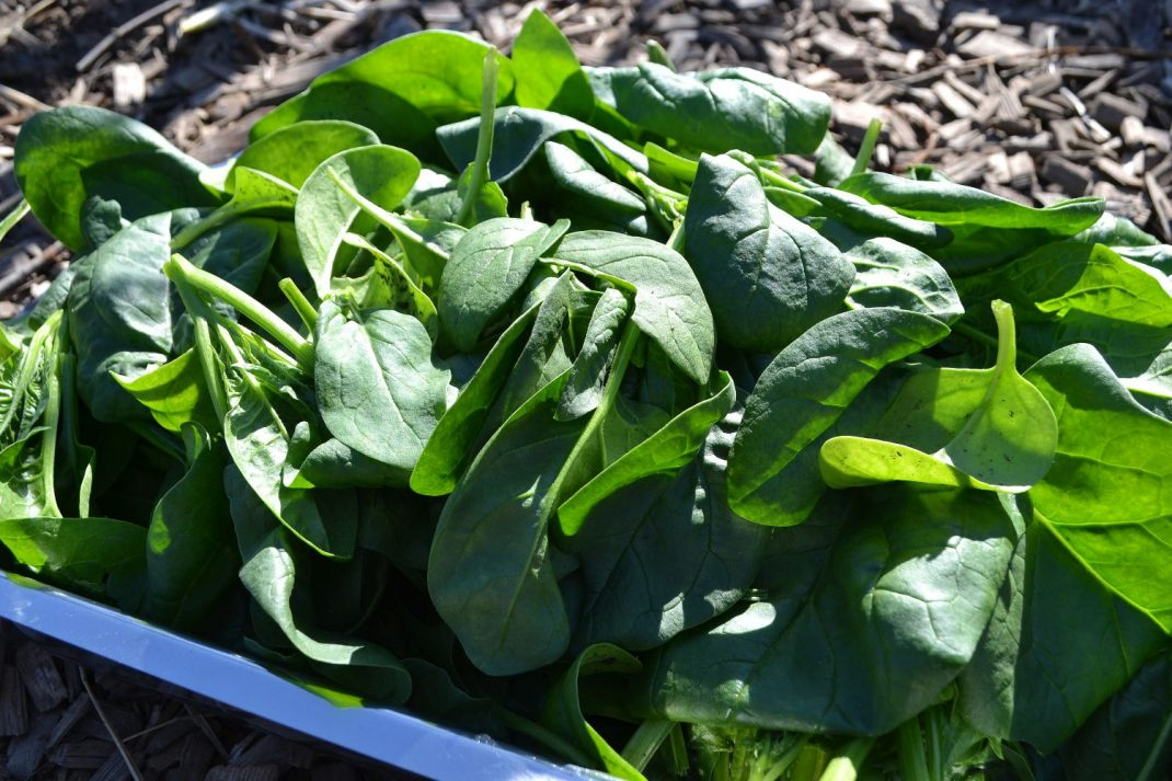 A plate of spinach leaves.