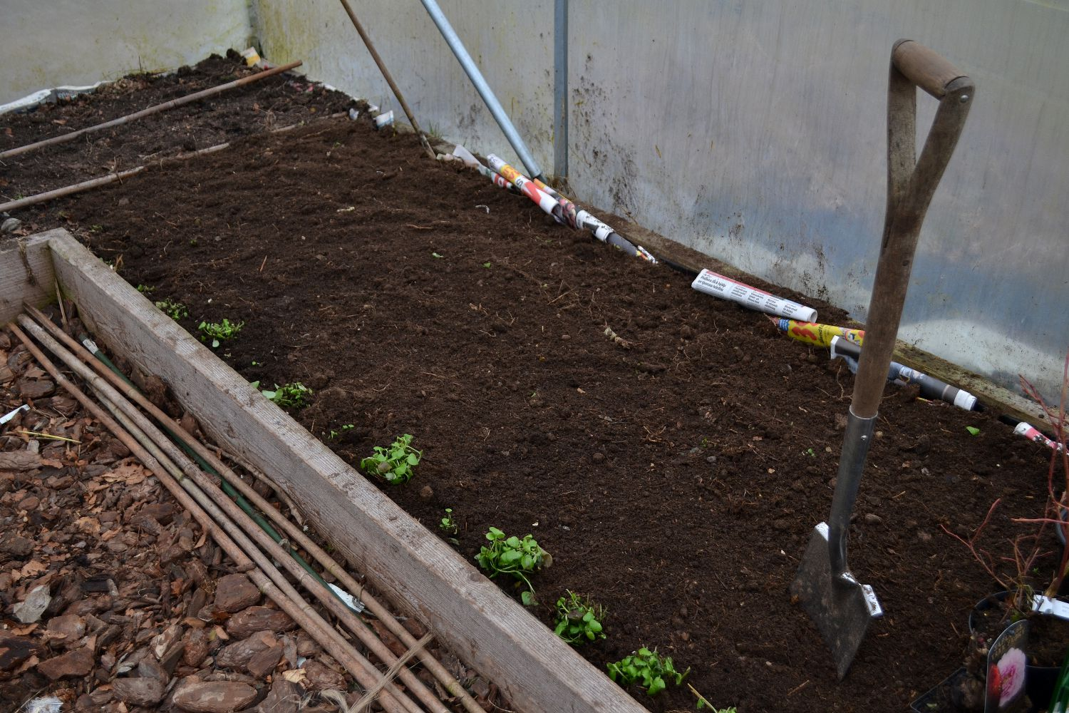 En odlingsbädd i tunnelväxthuset fylld med jord. Getting rid of couch grass, a bed in the polytunnel.
