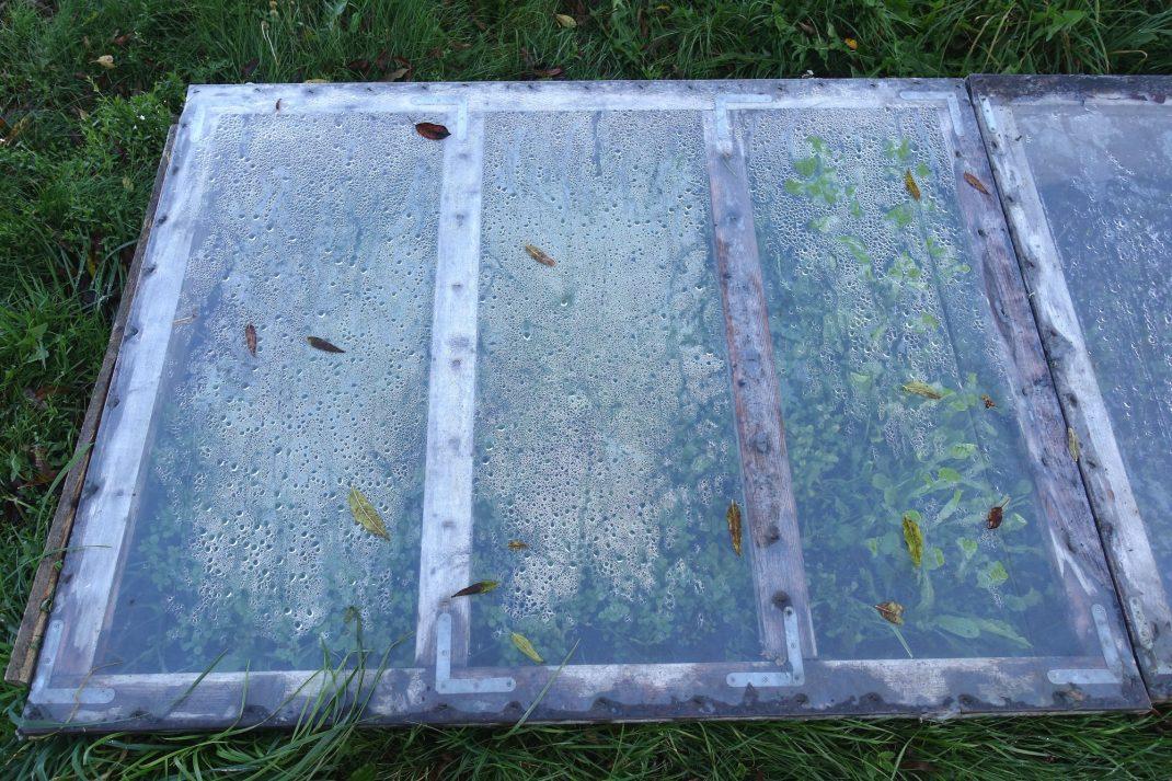 Bild tagen ovanifrån som visar ena locket. Picture showing my cold frame lid.