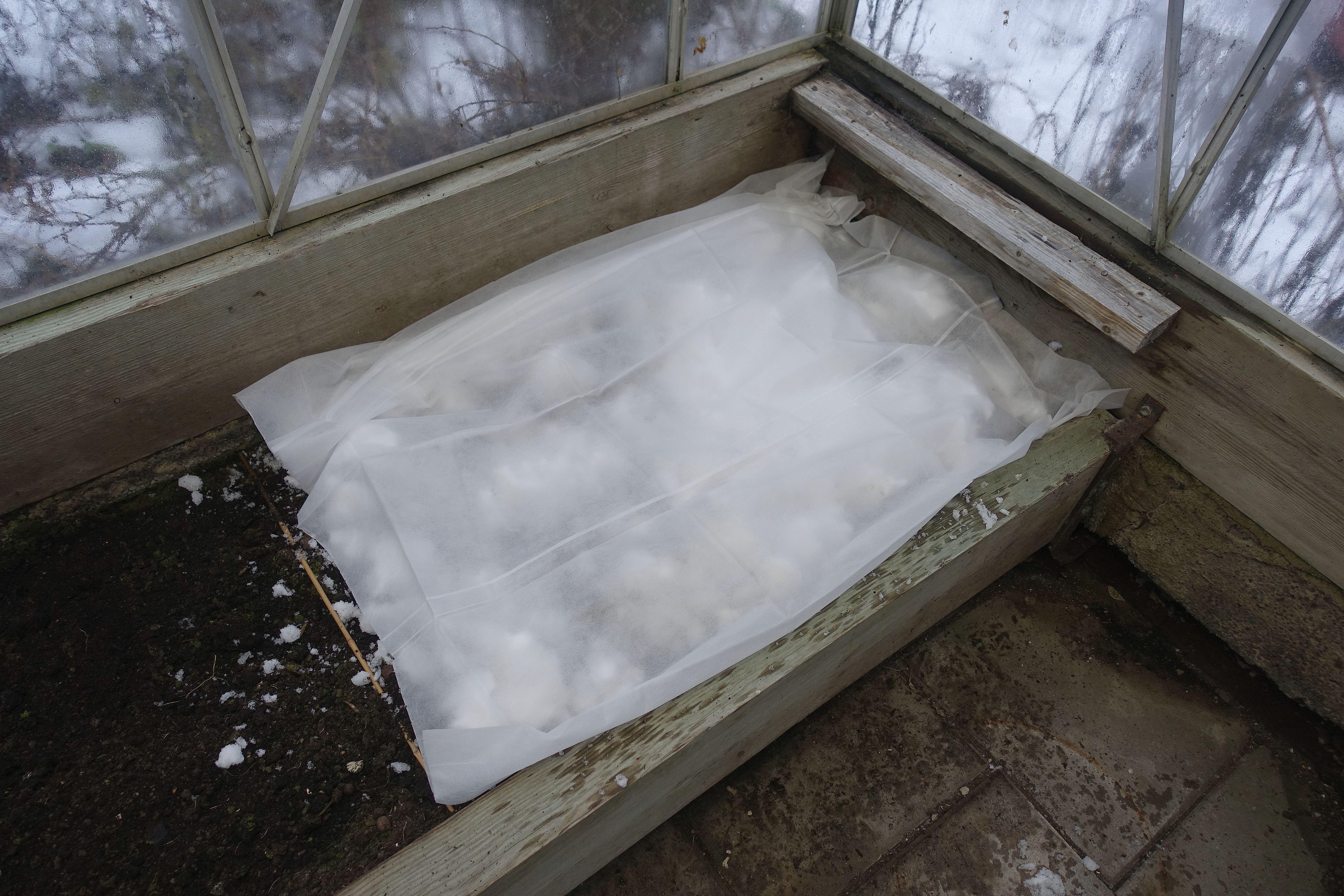 Bädd i växthus med snö och fiberduk på.