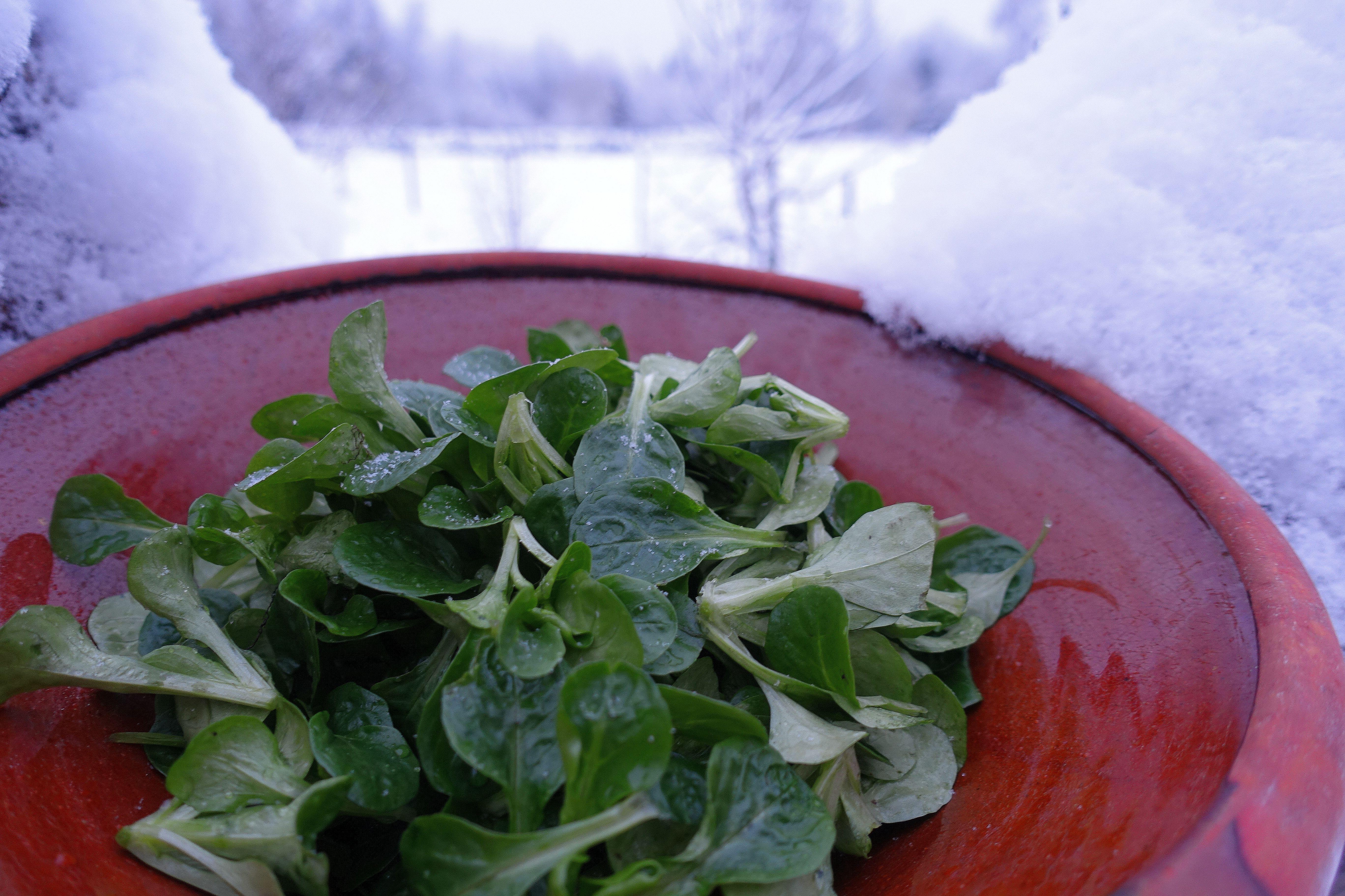 En skål med vintersallat står ute i snön.