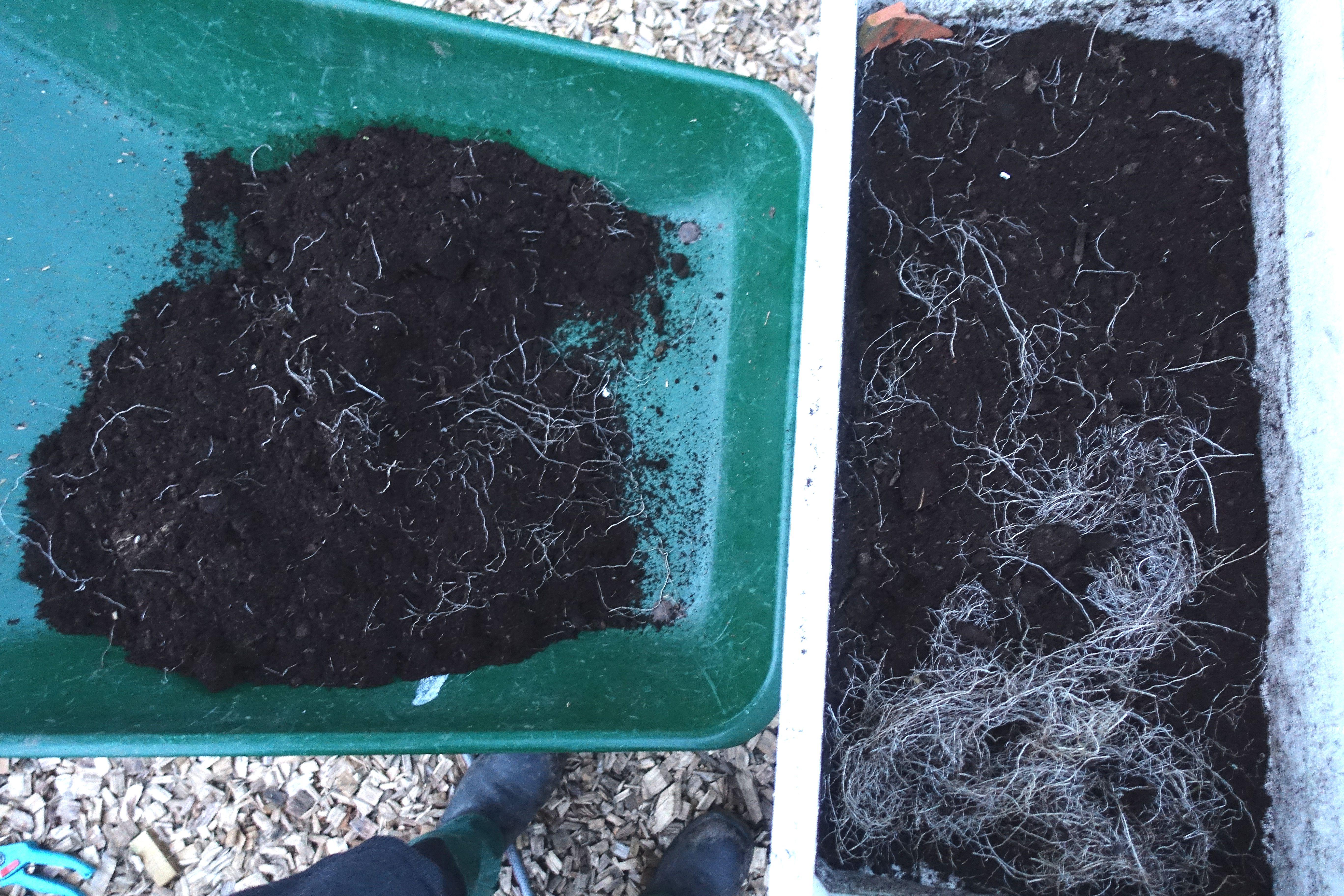 En frigolitlåda står på en skottkärra, med jord och växtmaterial i botten. Quick compost, styrofoam on a wheel barrow.