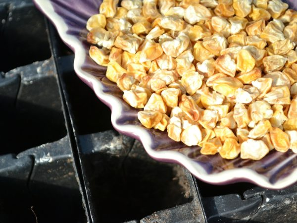 En bytta med torkad majs står över ett pluggbrätte.