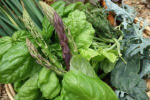 Närbild på korgen med ljust gröna basilikablad och nyskördad grön och lila sparris.