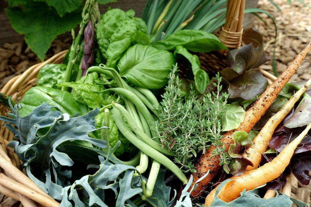 En korg med läckra bladgrönsaker och orangea späda morötter.