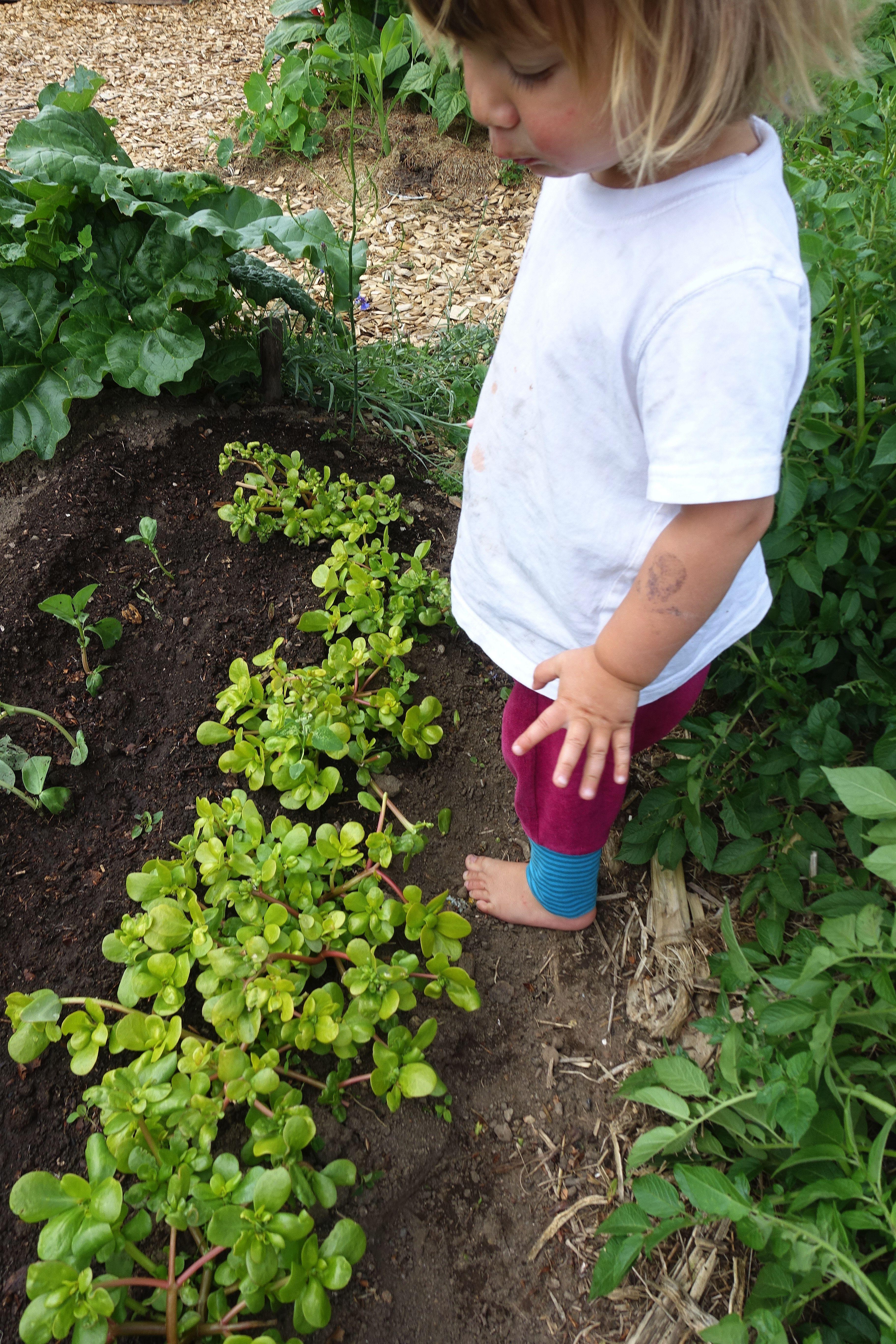 Ett barn står i trädgården och tittar på låga plantor.