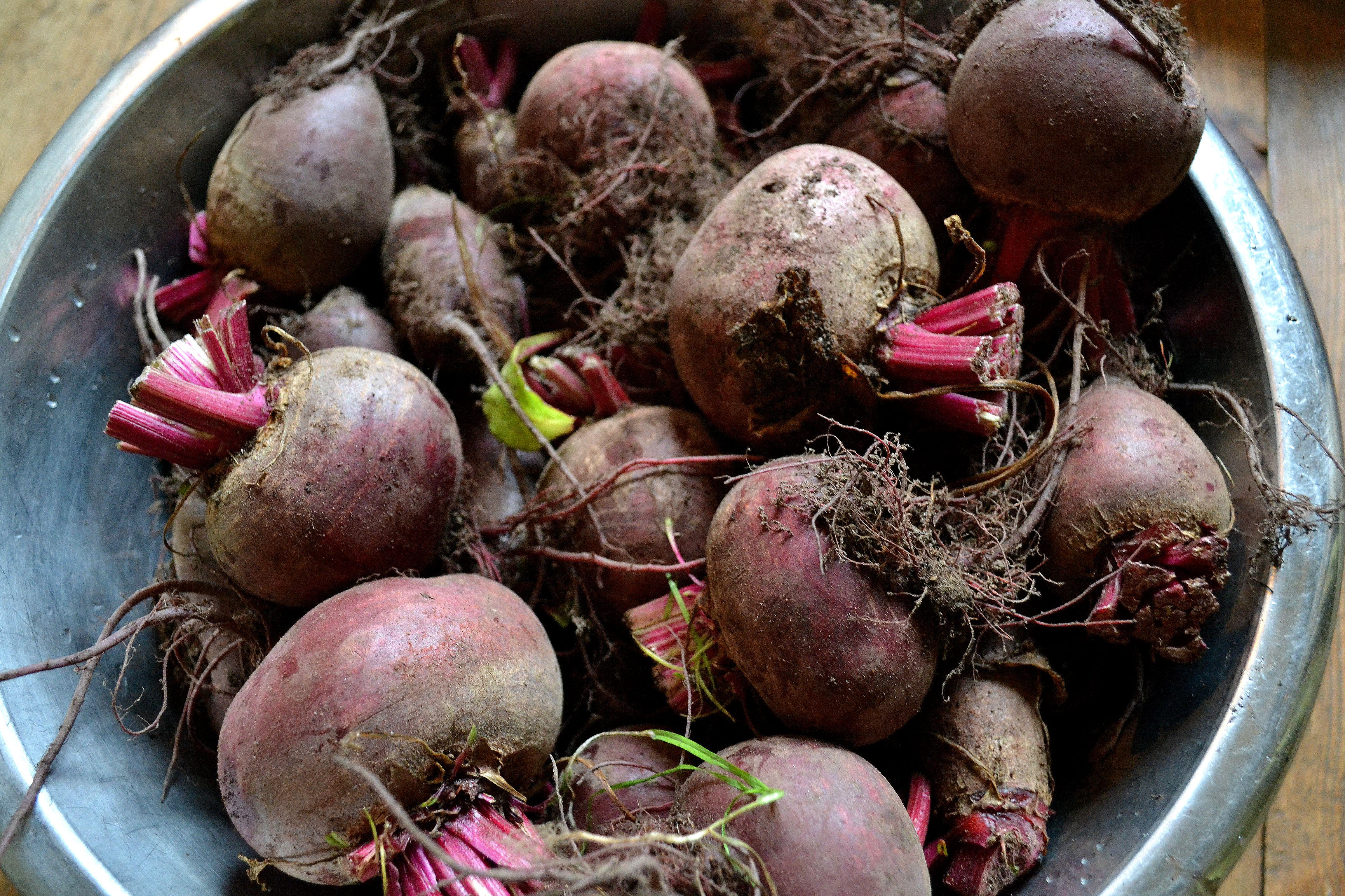 En rostfri skål med mängder av rödbetor i. Harvesting tips, beets.