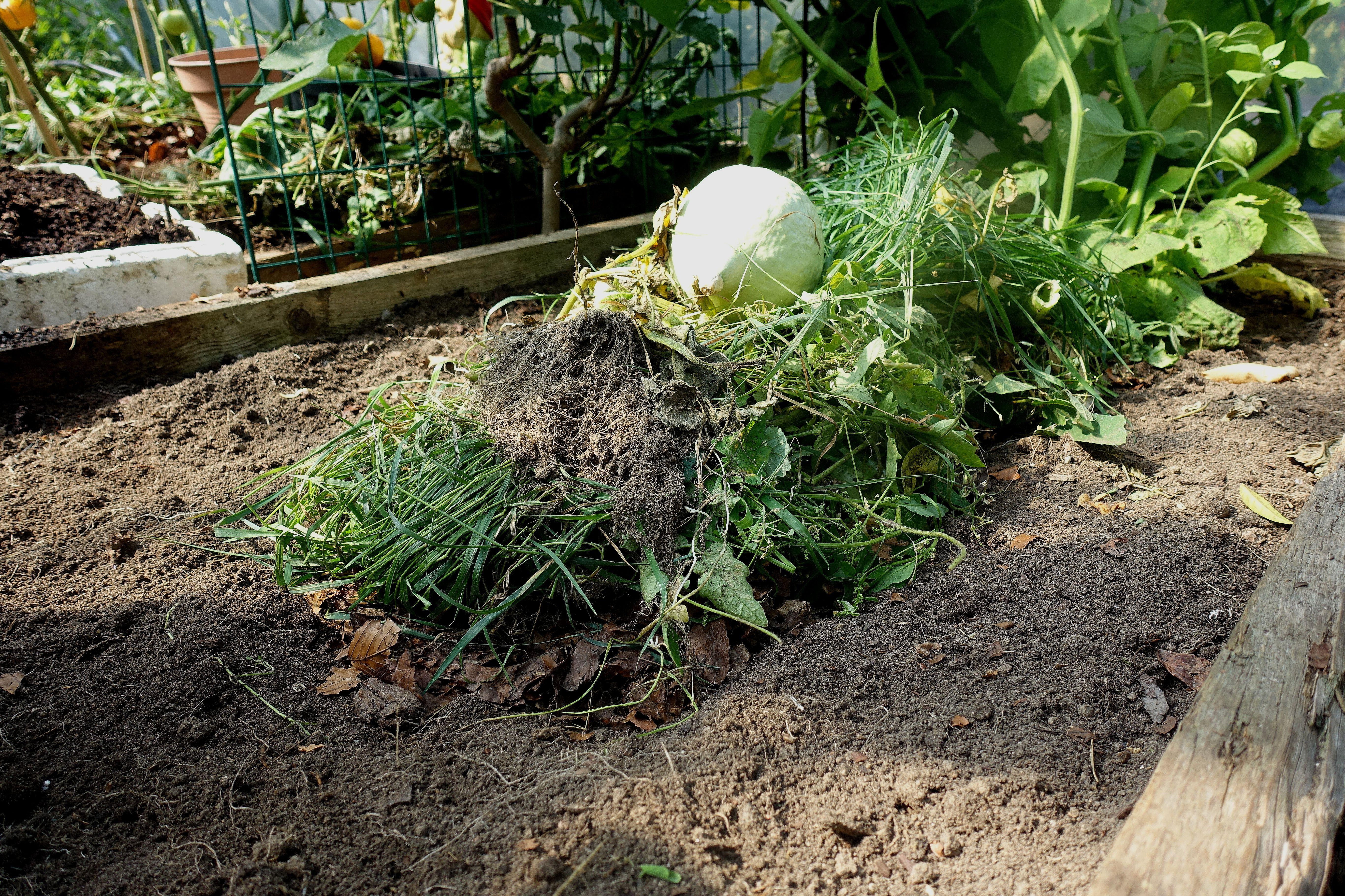 En bild på en odlingsbädd med jord och en hög med växtdelar i mitten. Mulching my polytunnels, a picture of a growing bed with plant parts.