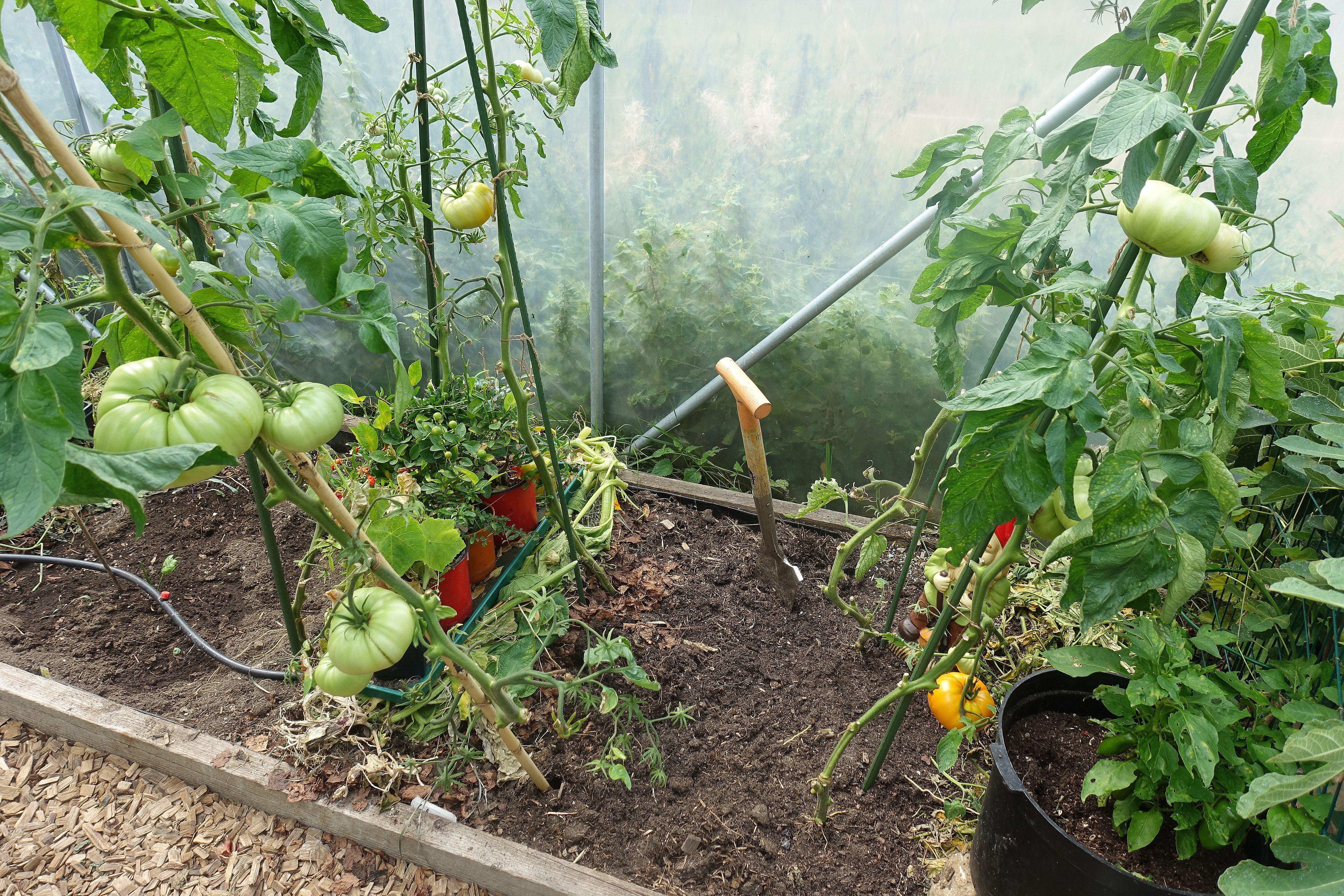 En odlingsplats sedd ovanifrån, med jord i bäddarna plus en del växtmaterial. Mulching my polytunnels, a bed from above.