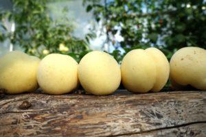 Vita persikor ligger på en rad på ett vedträd.