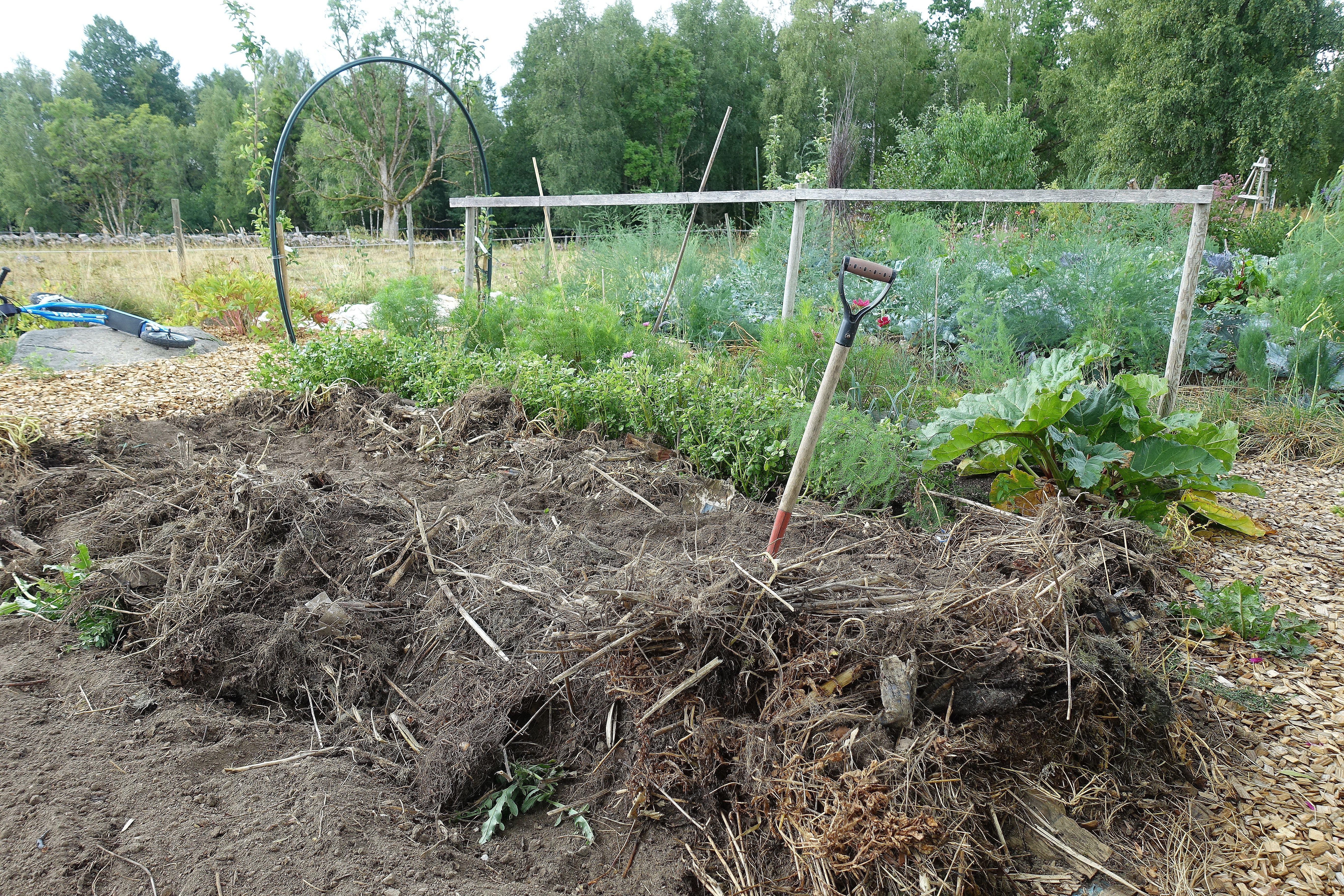 Bild på landen med stora högar av brunsvarta växtdelar på. Summer sowing, large piles of mulch