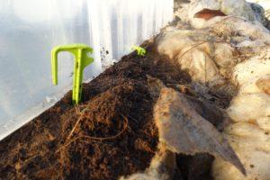 Närbild på små plastspjut nerstuckna i jorden.
