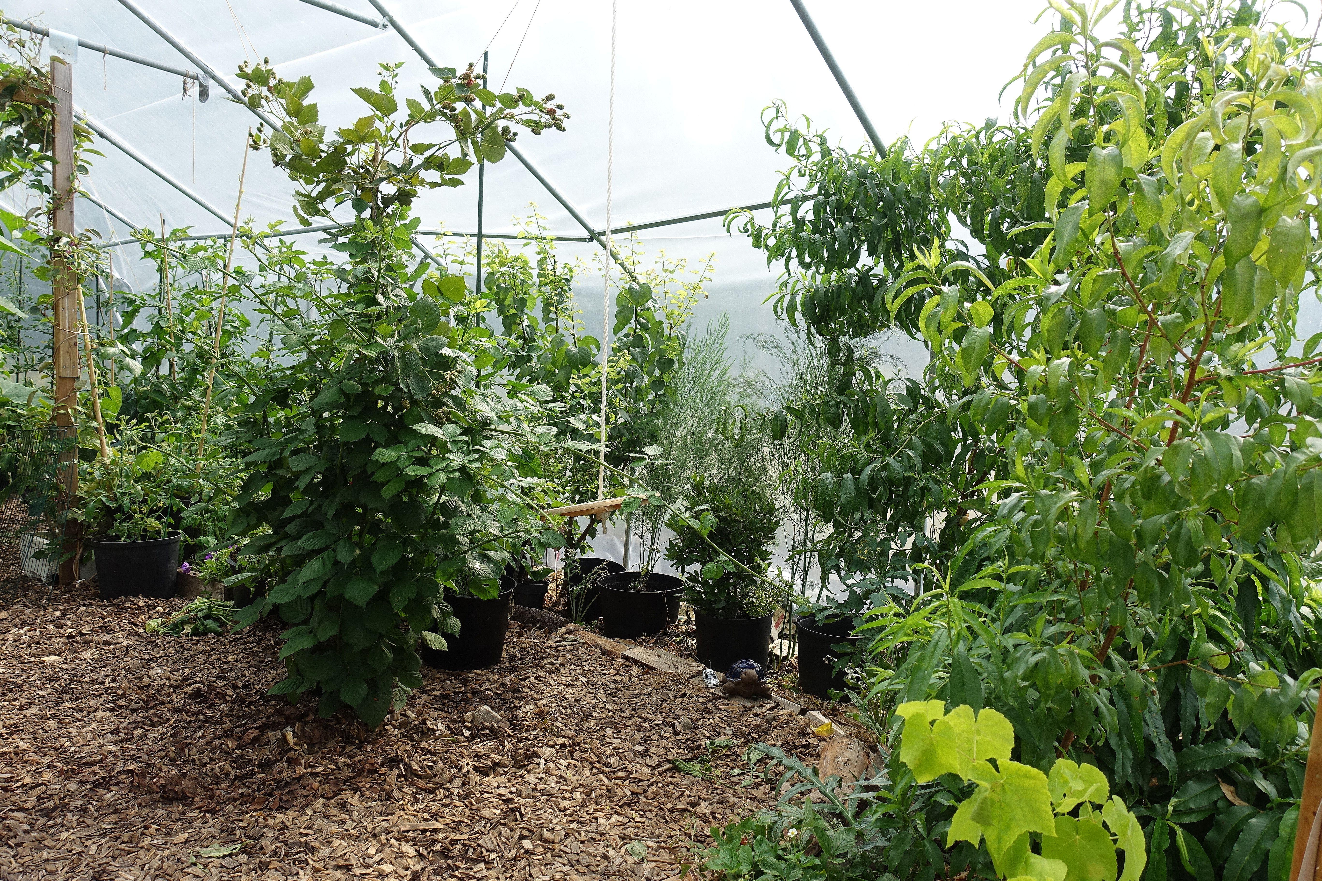 Bild inifrån tunnelväxthuset med vackra träd längs kanterna och ljus träflis på marken.