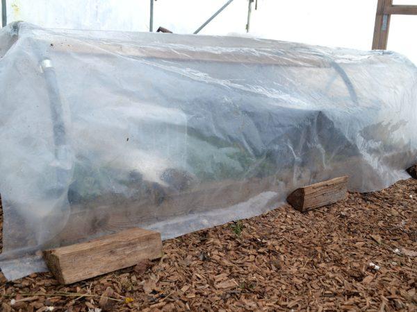 Ett bågformat litet växthus täckt av plast inuti ett stort växthus.