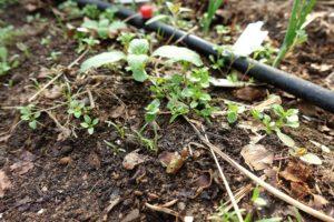 En jordig plätt med massa små gröna pluttar över jorden.