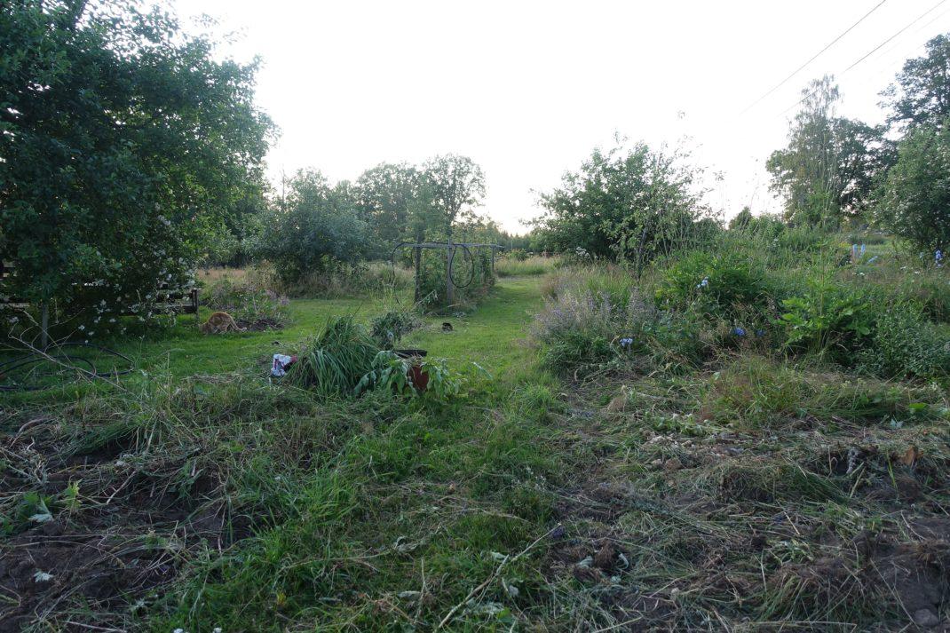 En fullständigt kraschad gräsmatta och forna perennland. New garden beds, my lawn and old flowers.