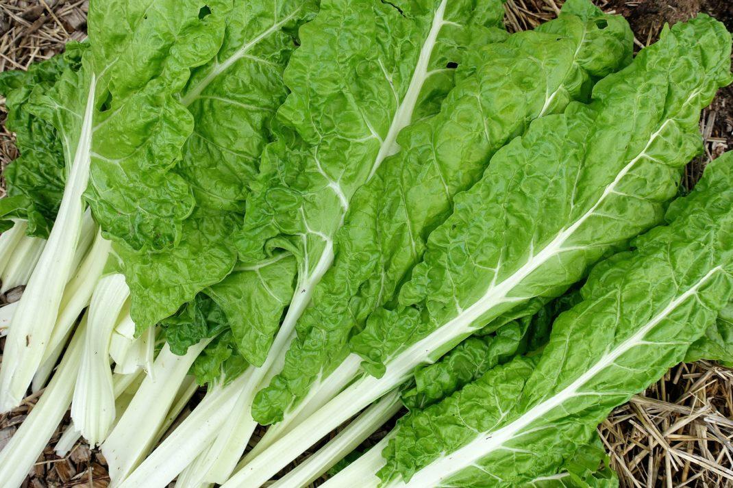 Gröna stora blad med vita mittnerver.