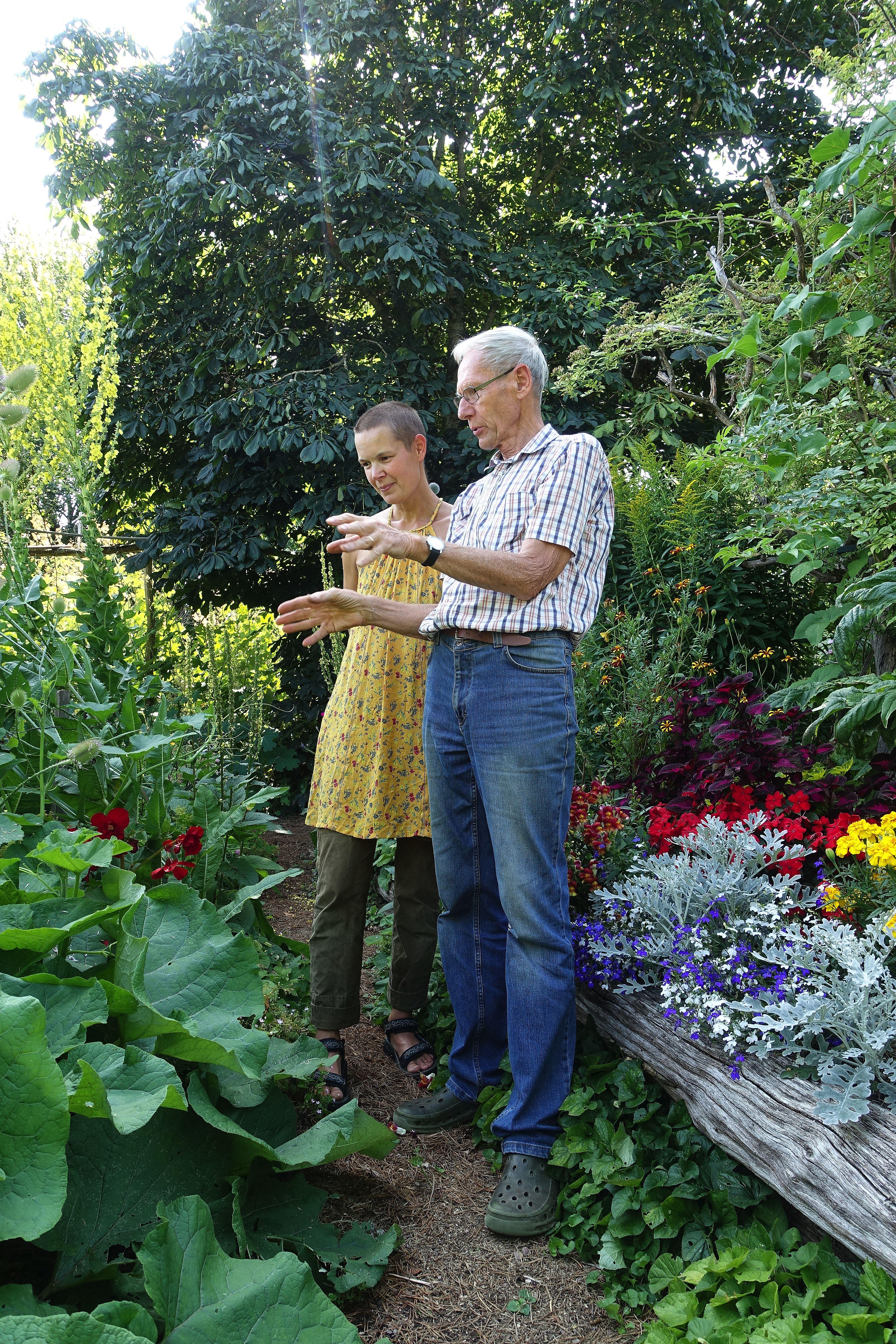 En kvinna i gul klänning och en äldre man i jeans och skjorta står i en trädgård och diskuterar. Mulched garden, Sara and Börje discussing the plants.