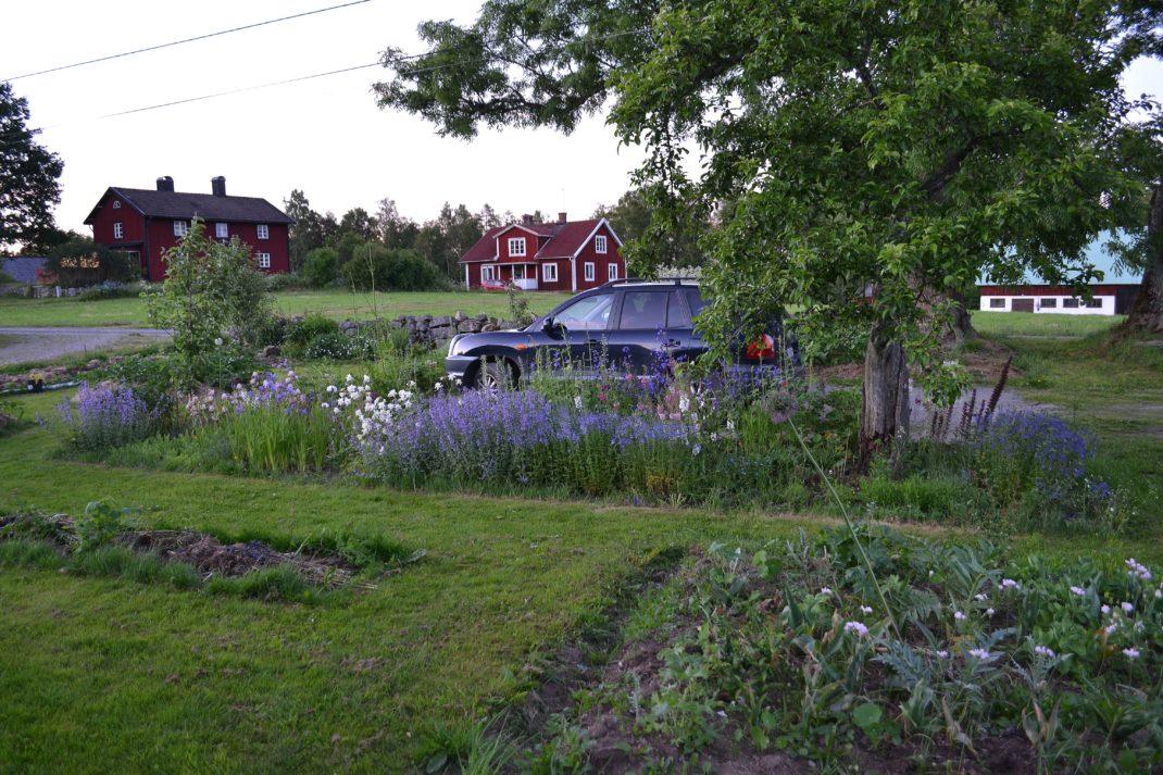 En mer ordnad trädgård med en rabatt med blåa blommor. New garden beds, flower bed.