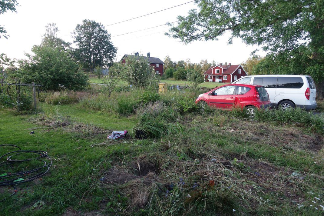 En igenvuxen del av en trädgård, med massa ogräs och två bilar som står i bakgrunden. A neglected part of my lot, new garden beds.