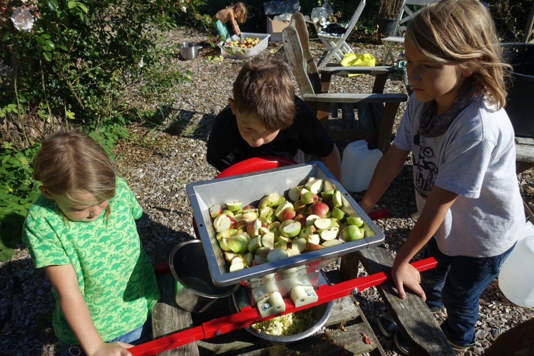 Barn krossar äpplen i en äppelkross. Apple juice, kids crushing apples in a fruit press.