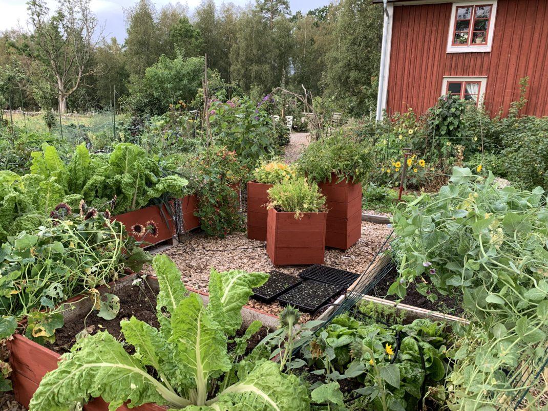 Massa pallkragar och odlingslådor med grönsaker i.