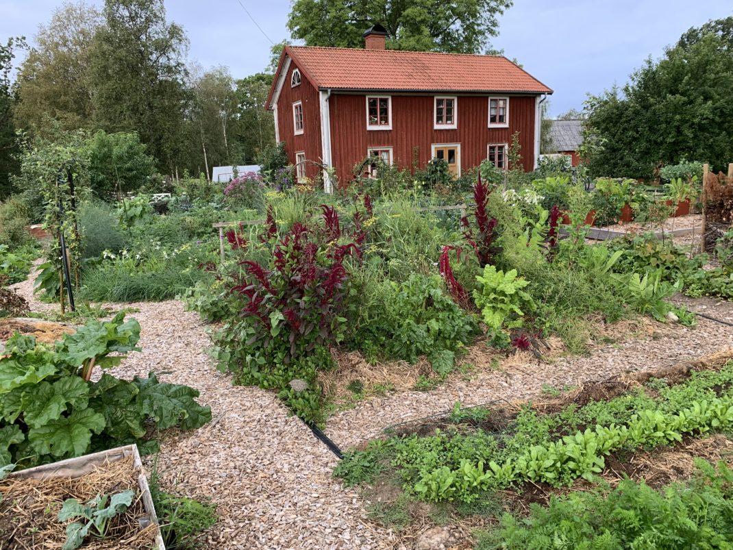 En överblick över köksträdgården; Skillnadens Trädgård