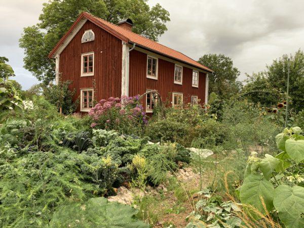 En vacker bild på en frodig grönsaksträdgård.