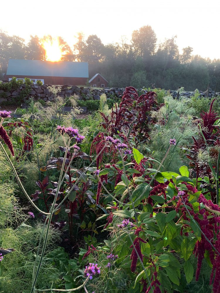 Companion planting in the raised bed garden.