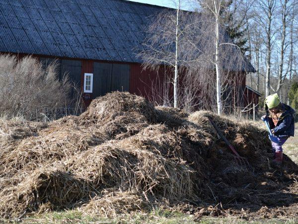 En stor gödselhög och ett litet barn som gräver i den.