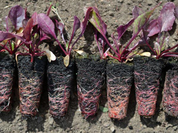 En lång rad med små plantor bredvid varandra.