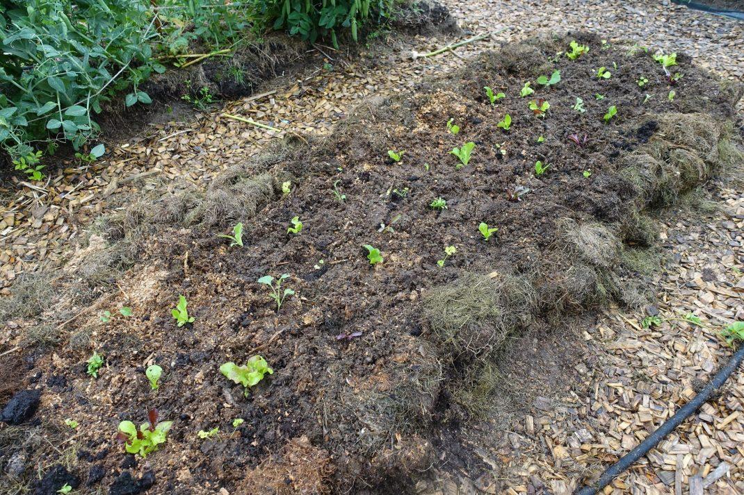 Planterad bädd med små gröna tussar.