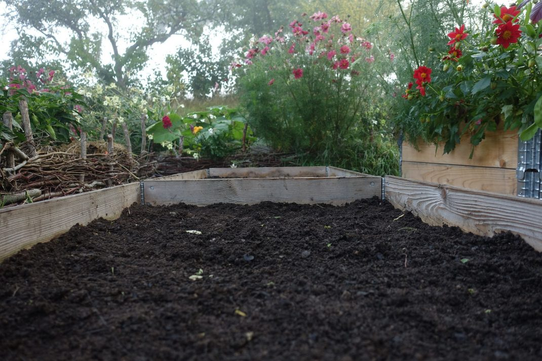 Raised beds in fall, close-up.