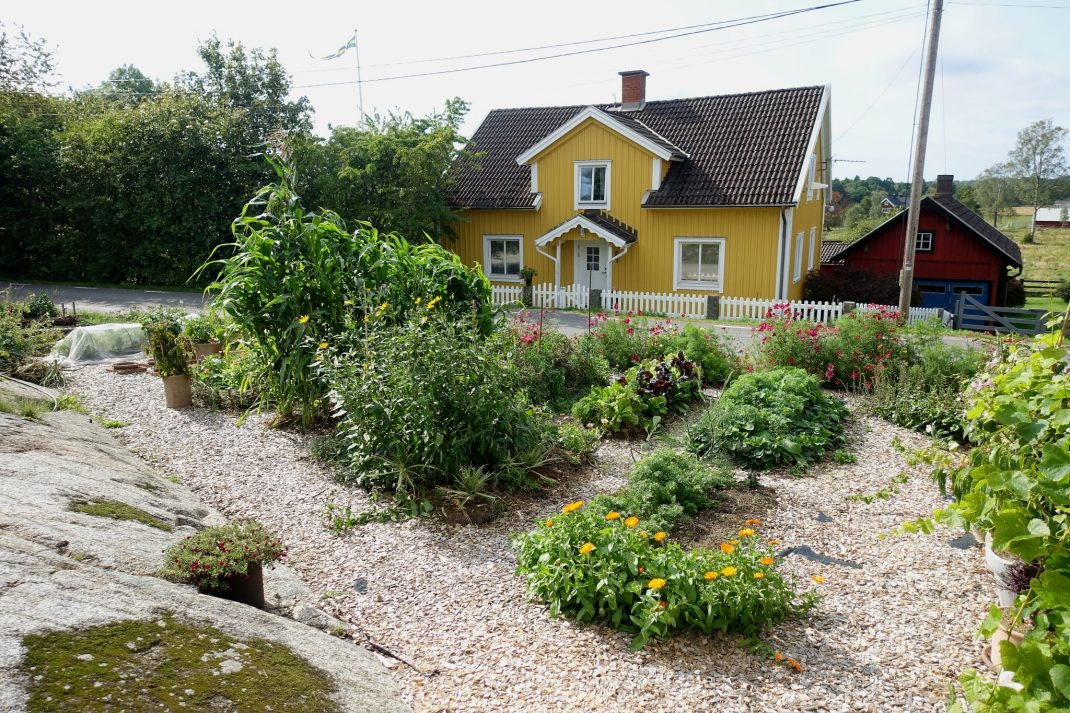 Fall garden edged by woodchips