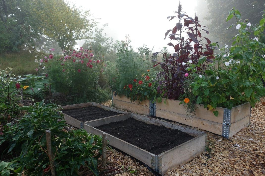 Raised beds in fall light.