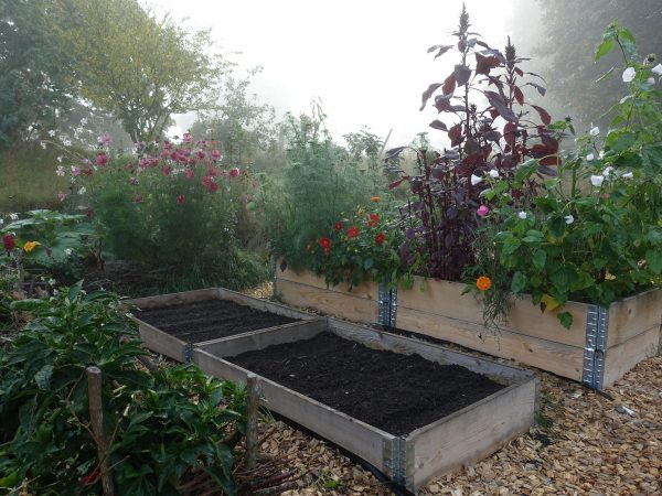 Köksträdgård i morgondis.