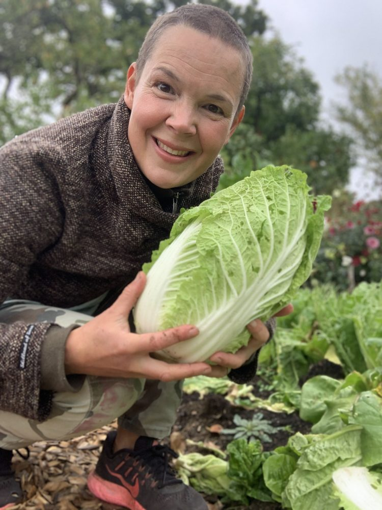Sara's newly harvested napa cabbage.