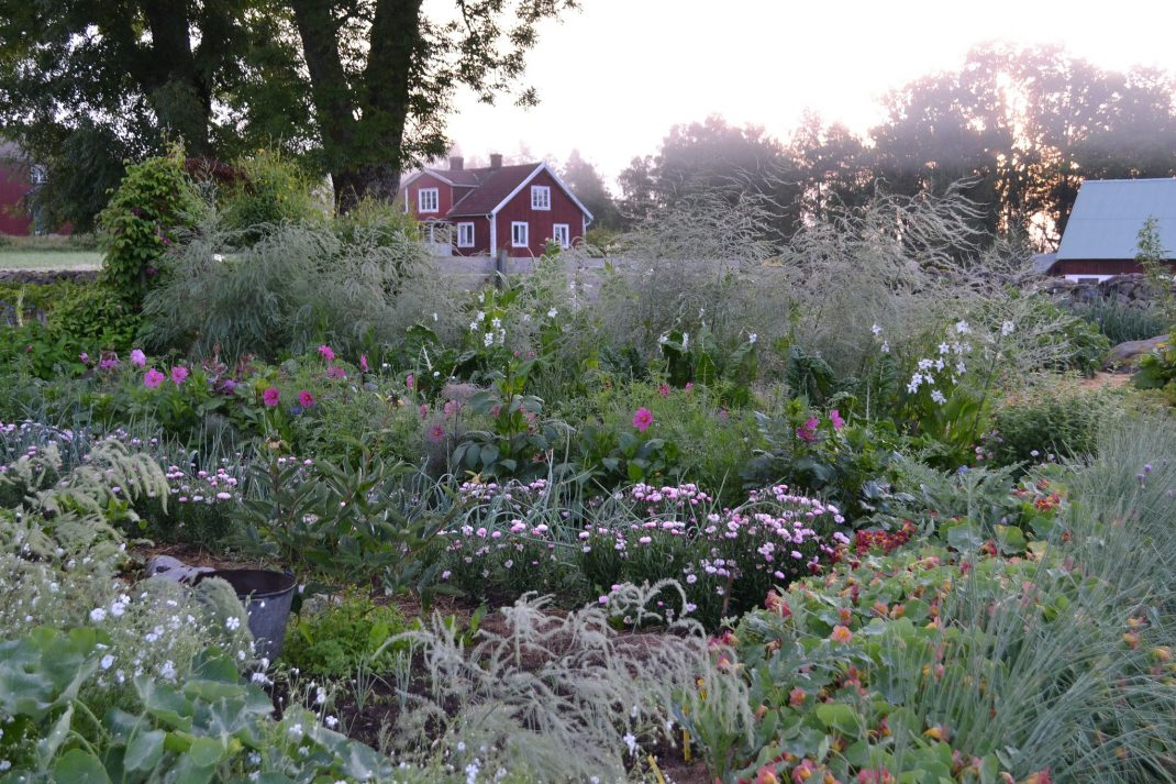 Foggy flower garden with plenty of plants.