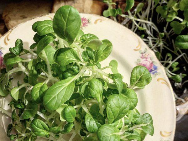 En tallrik med små gröna blad på.