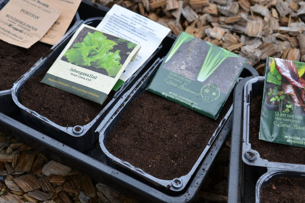 Plastic boxes with soil and seed packets for microgreens on top.